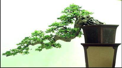 Kisaran Harga Bonsai Mini Yang Perlu Diketahui