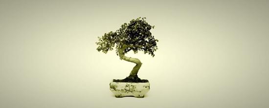 Latar Belakang Terciptanya Seni Tanaman Bonsai Yang Perlu Diketahui