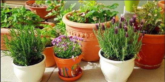 Cara Merawat Tumbuhan Hias Pada Pot Yang Ringan