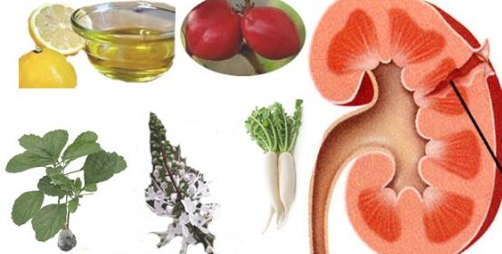 Cara Obati Penyakit Ginjal Dengan Tumbuhan Herbal Paling Praktis
