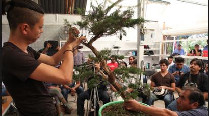 Demo Bonsai Dari Sang Master Bonsai Terkenal Dipenjuru Dunia