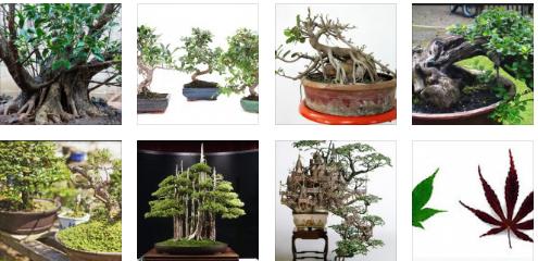 Berbagai Hal Tentang Bonsai Yang Sangat Berpengaruh Di Dunia Bonsai