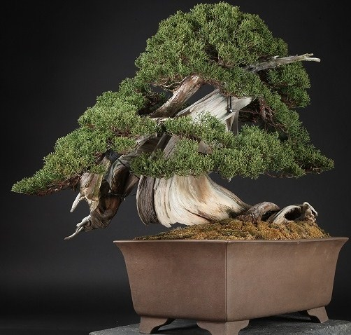 Harga Tumbuhan Bonsai Ternama Yang Wajib Kita Ketahui