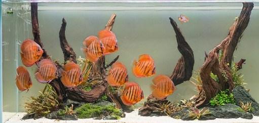 Ikan Hias Aquascape: Untuk Bonsai Aquascape Yang Indah