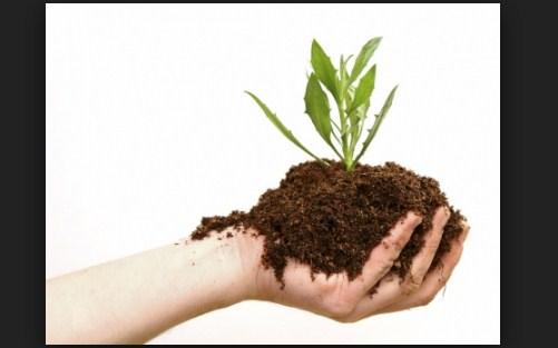 Pupuk Kompos: Jenis-jenis & Karakteristik Dalam Membuatnya
