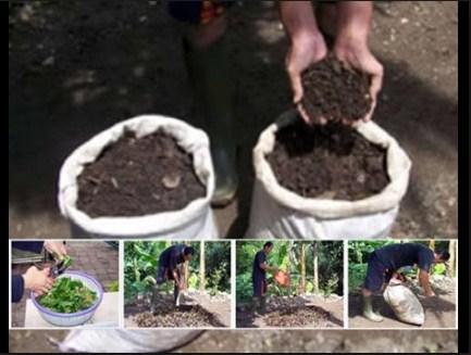 Pupuk Kompos: Cara Membuatnya Dengan Sederhana Untuk Bonsai