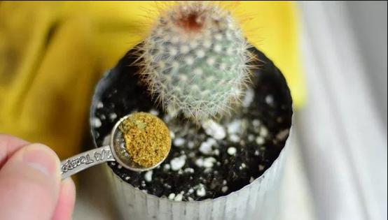Cara Merawat Tanaman Hias Kaktus Agar Tidak Busuk Paling Mudah