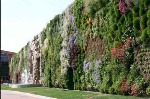 Vertikal Garden: 30 Jenis Tumbuhan Untuk Ditanam Yang Indah Paling Mudah