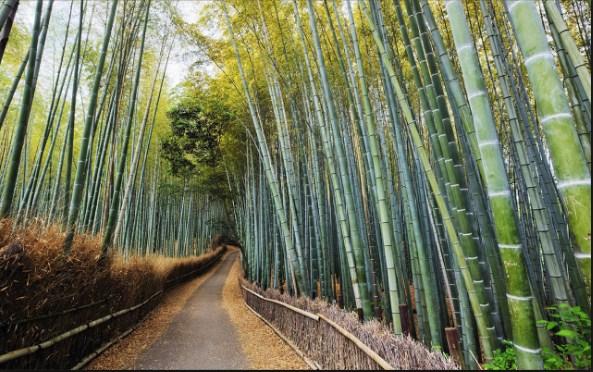 Bonsai Bambu: Dekorasi Interior Eksterior Menggunakan Bambu Super Mudah