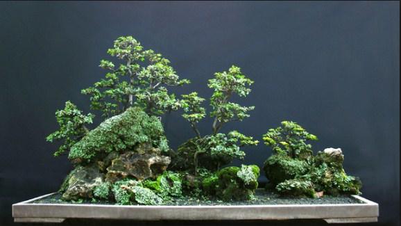 Bonsai (Yose-ue): Bonsai Gaya Hutan Yang Indah Untuk Dipelajari Kita Semua