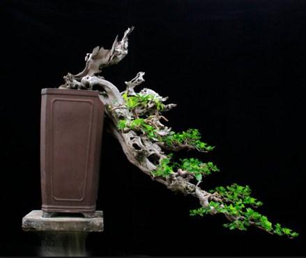 Bentuk Pohon Chokkan & Shakan: Mengejar Ideal Berdasarkan Karakter Dari Bonsai