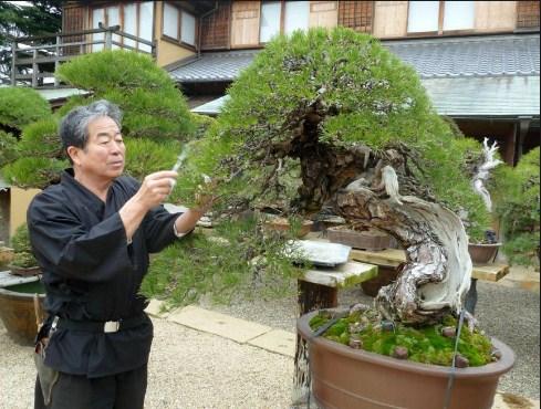 Kunio Kobayashi: Mengenal Lebih Dekat Pengalaman Sang Master Dengan Bonsai