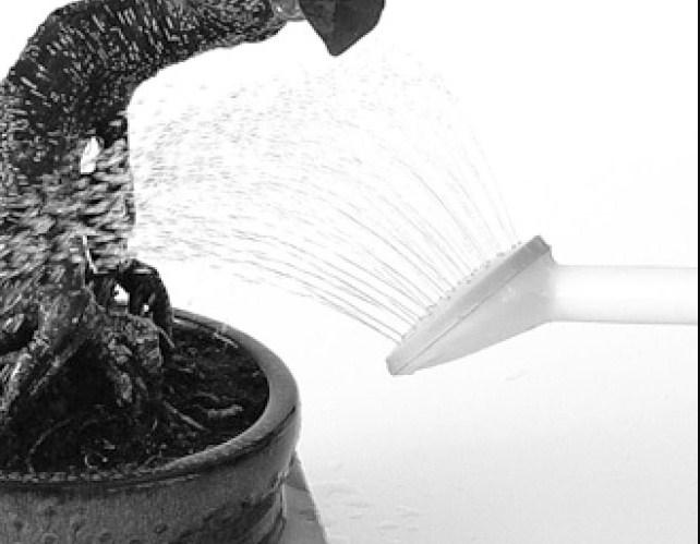 Penyiraman Bonsai: Proses Penyiraman Khusus Pada Bonsai Kesayangan Kita