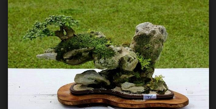 Pot Bonsai: Cara Memilih Pot Yang Sesuai Untuk Bonsai Anda Dengan Mudah