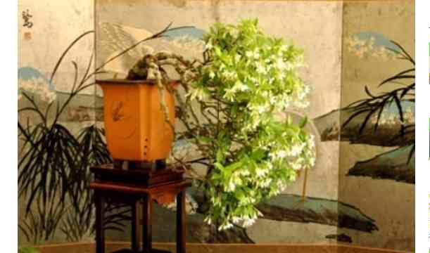 Pentingnya Tampilan Bonsai Untuk Keindahan Yang Maksimal