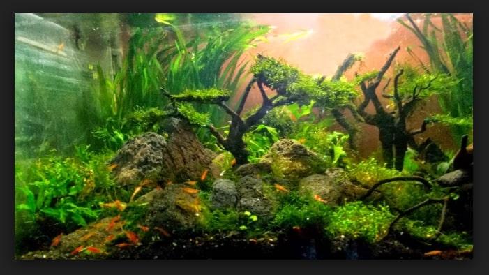 Tips Membuat Pohon Bonsai Aquascape Sederhana Dengan Moss Untuk Pemula