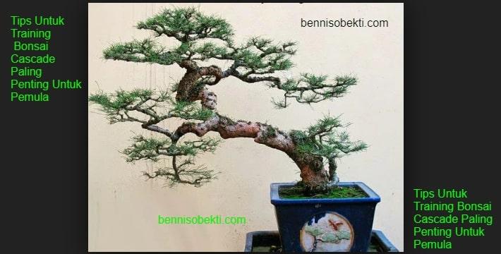Tips Untuk Training Bonsai Cascade Paling Penting Untuk Pemula