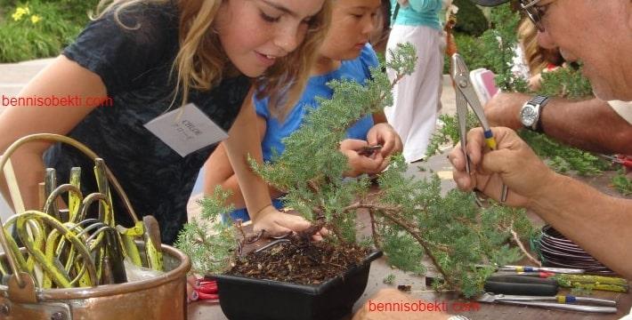 Tips Menciptakan Pohon Bonsai Yang Baik Untuk Pemula