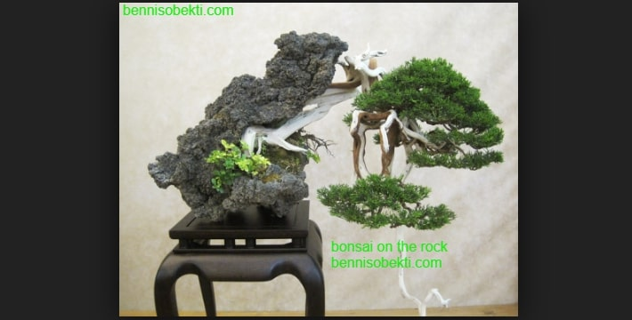 Cara Membuat Bonsai On The Rock Secara Mandiri