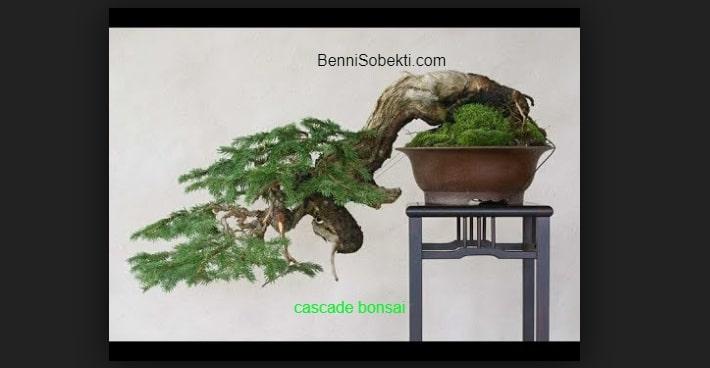 Tips Simpel Bonsai Cascade Style Layak Untuk Dinikmati