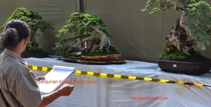 Tips Penjurian Bonsai Yang Ideal Di Setiap Pameran Bonsai