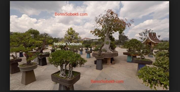 Pohon Bonsai Bernilai Jutaan Dolar Di Negara Vietnam
