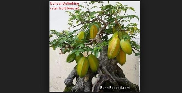 Bonsai Belimbing: Cara Menanam Belimbing Paling Mudah