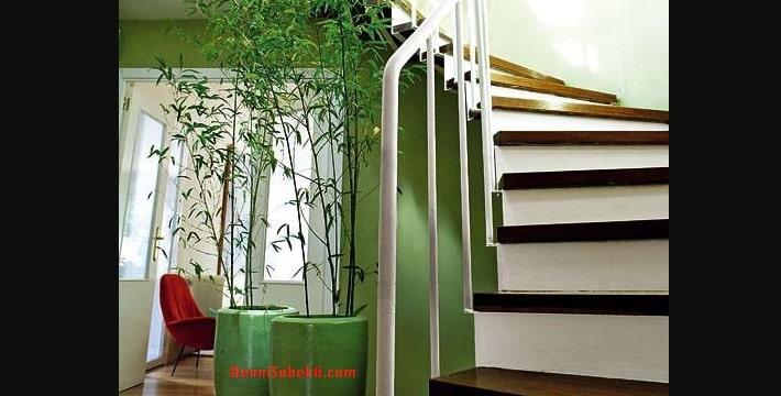 Cara Merawat Tanaman Bambu Dalam Ruangan