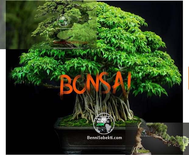 Info Bonsai