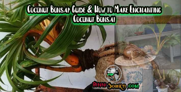 Coconut Bonsai: Guide & How to Make Enchanting Coconut Bonsai