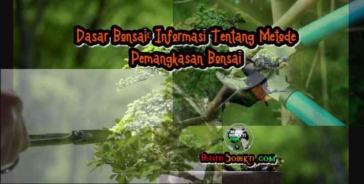 Dasar Bonsai: Informasi Tentang Metode Pemangkasan Bonsai